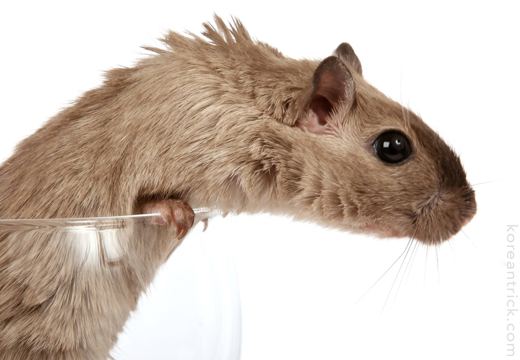 The winning hamster or why it's hard to be a woman